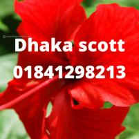 Dhaka escort service d